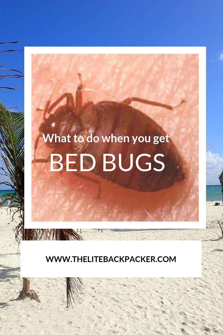 Bed Bugs and what to do