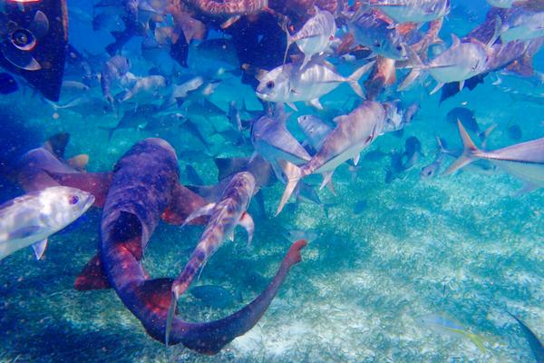 Snorkelling Caye Caulker Belize 3