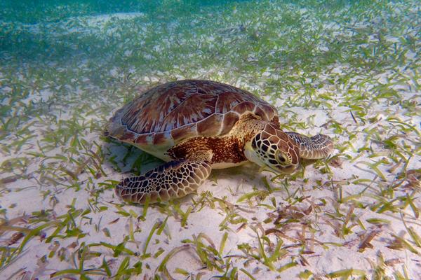 Snorkelling Caye Caulker Belize