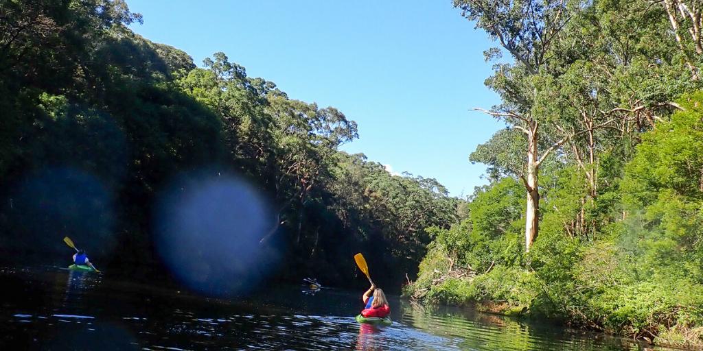 Kayaking through Lane Cove National Park in Sydney