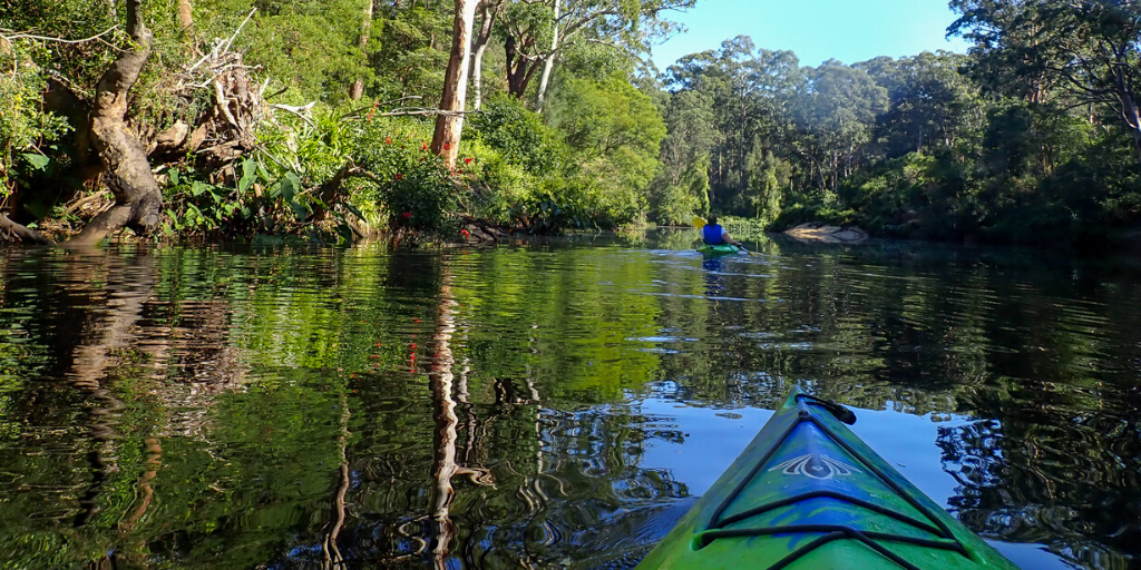 Kayaking through Lane Cove National Park in Sydney